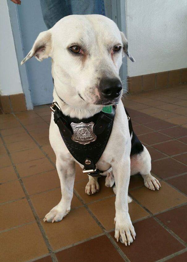 perro-callejero-gorgi-adoptado-policia-puerto-rico-6