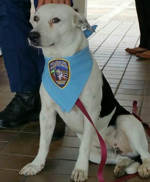 perro-callejero-gorgi-adoptado-policia-puerto-rico-7