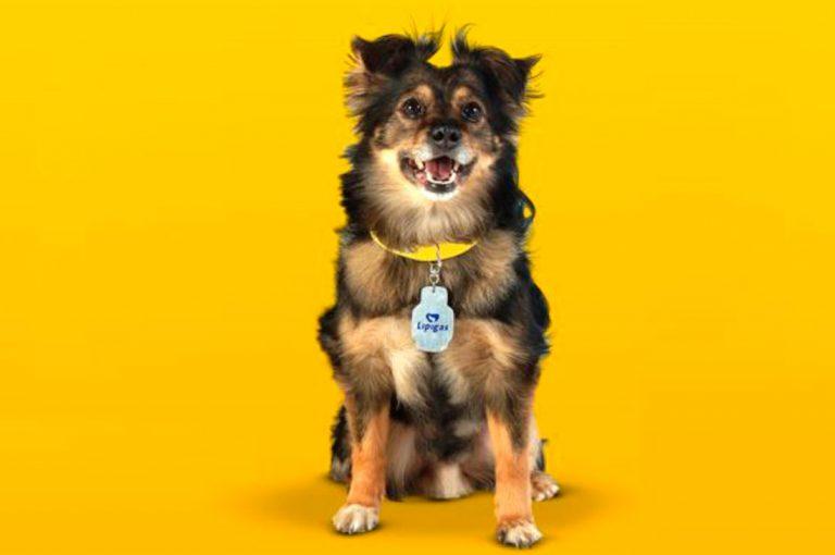 El nuevo perro imagen de Lipigas no convence