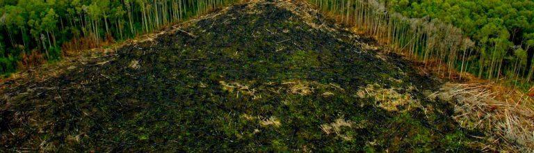 """ONU alerta: """"Cada 3 segundos, el mundo pierde una superficie de bosque equivalente a una cancha de fútbol"""""""