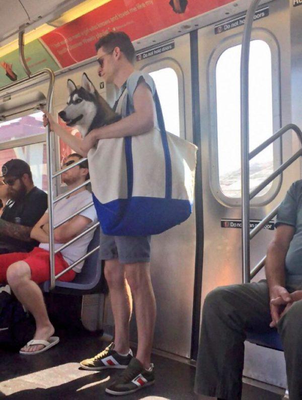 perros-grandes-bolsos-metro-nueva-york-2
