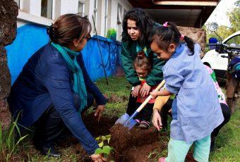 Conaf entrega a la comunidad de Rapa Nui más de 7.000 árboles para combatir la erosión
