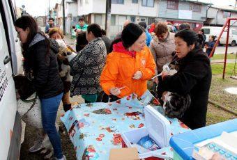 Exitoso plan de esterilización de mascotas en Valdivia
