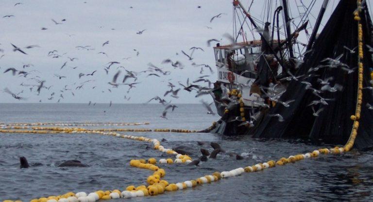 Otro remezón político: Aparecen nuevas boletas de pesqueras a senadores y diputados