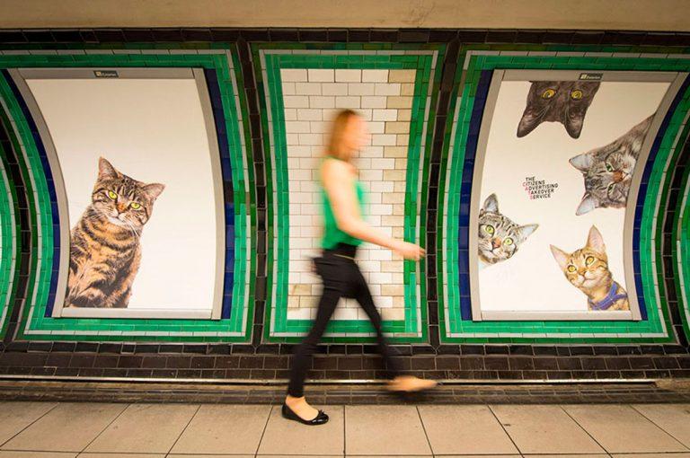 Estación Londinense es empapelada con fotos de gatos