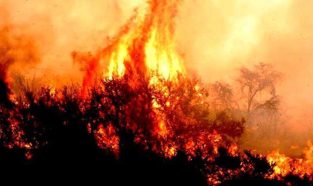 """Premio Nacional de Ciencias 2010: """"Los eucaliptos se llaman árboles gasolina"""""""