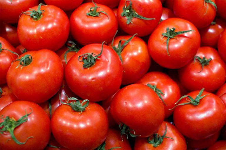 Tomate natural v/s transgénico
