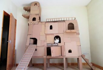 Este gato tiene un castillo de cartón con forma de dragón