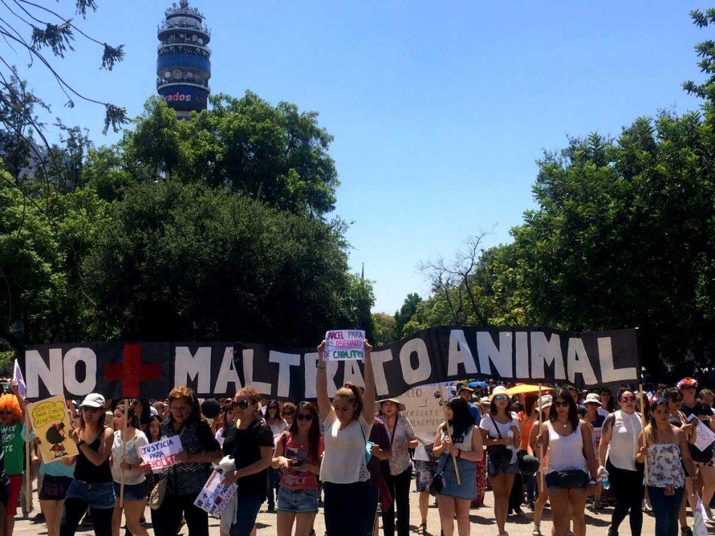 Marcha contra el maltrato animal y en memoria de Cholito congrega a miles de personas en el país