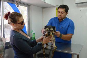 Independencia sigue exitoso plan gratuito de esterilización de gatos y perros