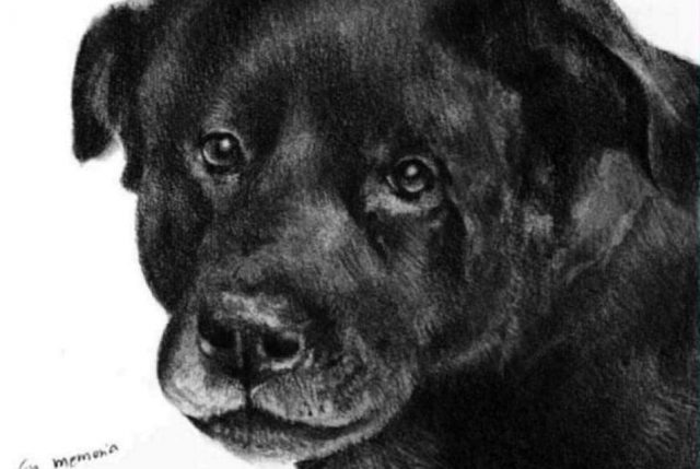 Chile se moviliza contra el maltrato animal y pide #JusticiaParaCholito