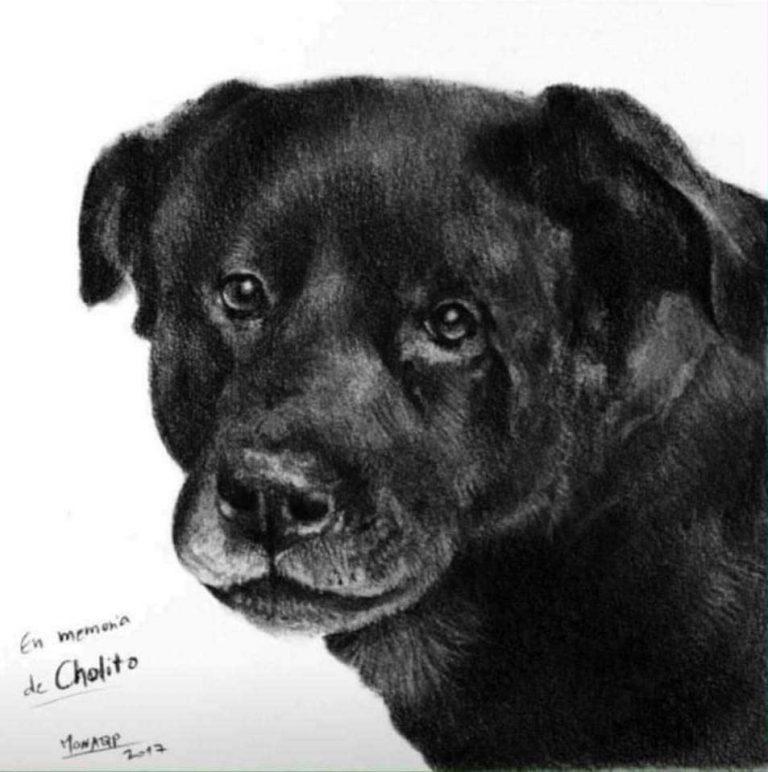 Tras asesinato de Cholito senadores piden urgencia para despachar ley Tenencia Responsable de Animales