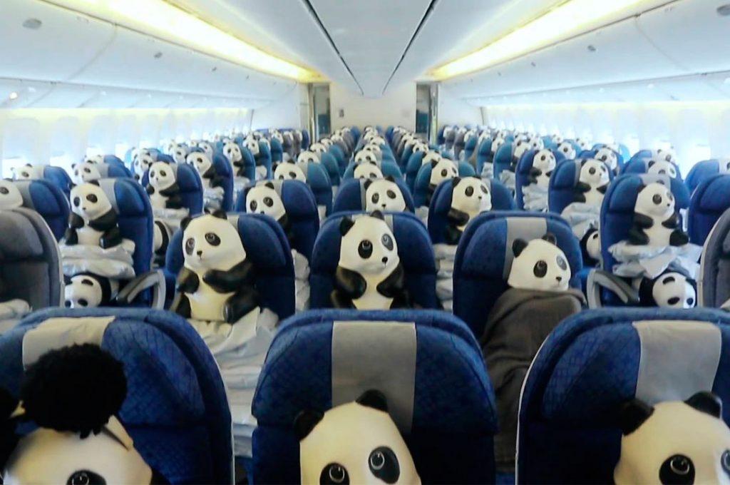 La historia viral del panda en un avión