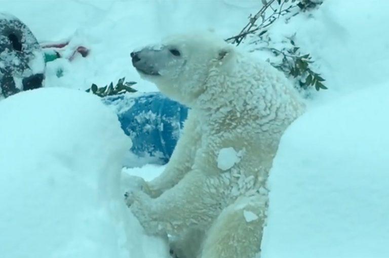 Zoológico de Oregon cierra por tormenta de nieve y los animales lo disfrutaron al máximo