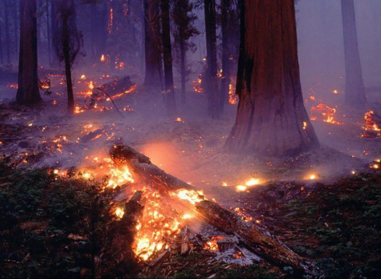 Hombre mayor de edad estaría detrás de incendio forestal en Hualqui: detenido por Carabineros tras denuncia de vecinos