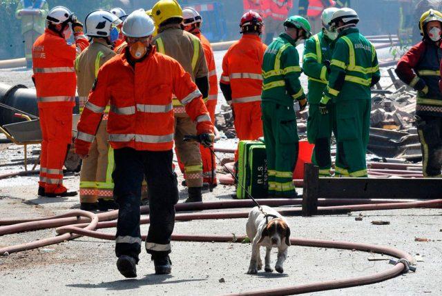 Cómo cuidar a los animales frente a los incendios
