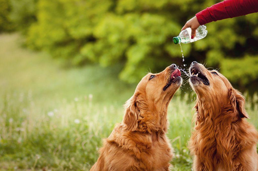 Ante constantes altas temperaturas: Evita que tu mascota sufra con la ola de calor