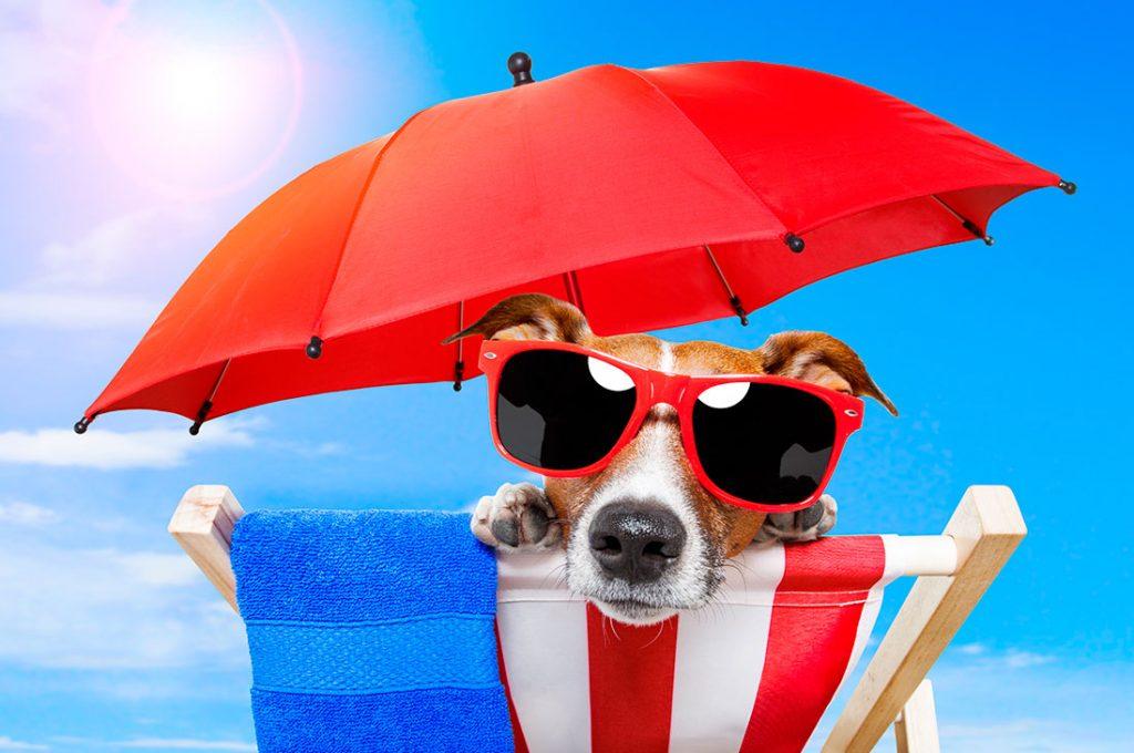 Las mascotas también se deben cuidar del sol cuando salen de vacaciones
