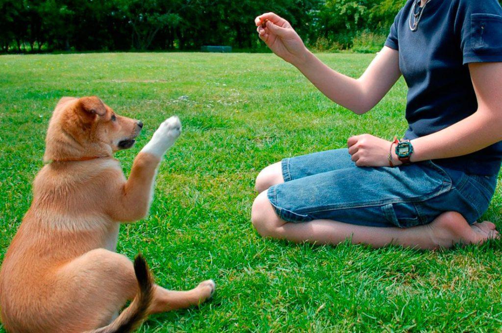 Guía para el dueño primerizo de una mascota