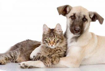 Adopción de mascotas: La opción de dar amor y un hogar