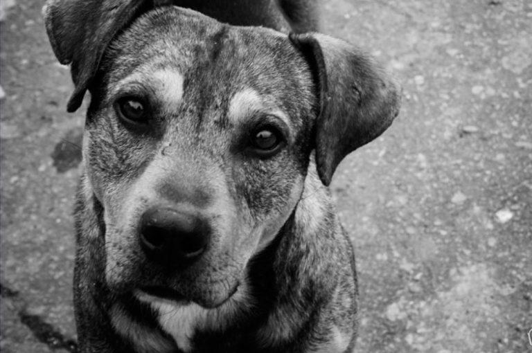 27 de julio Día del Perro Callejero: #AdoptaNoCompres