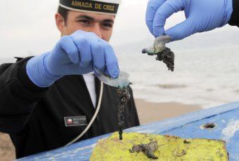Armada advierte sobre presencia de fragata portuguesa en tres playas de Viña del Mar