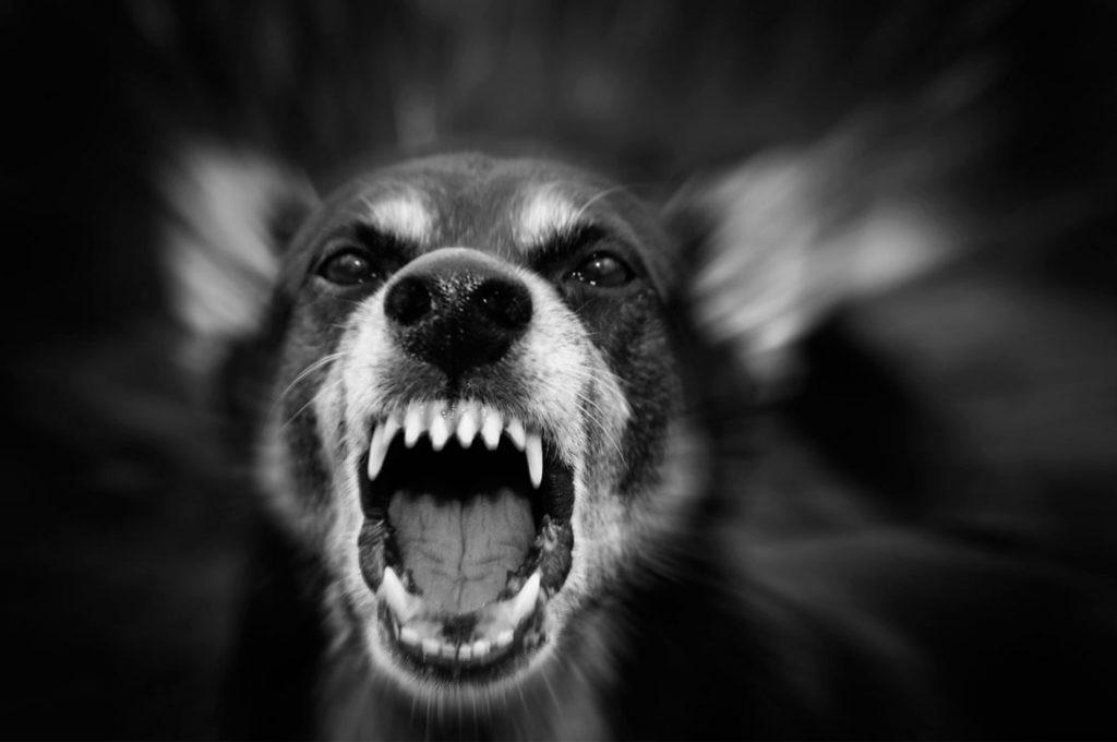¿Cómo mejorar la conducta agresiva de mi perro?