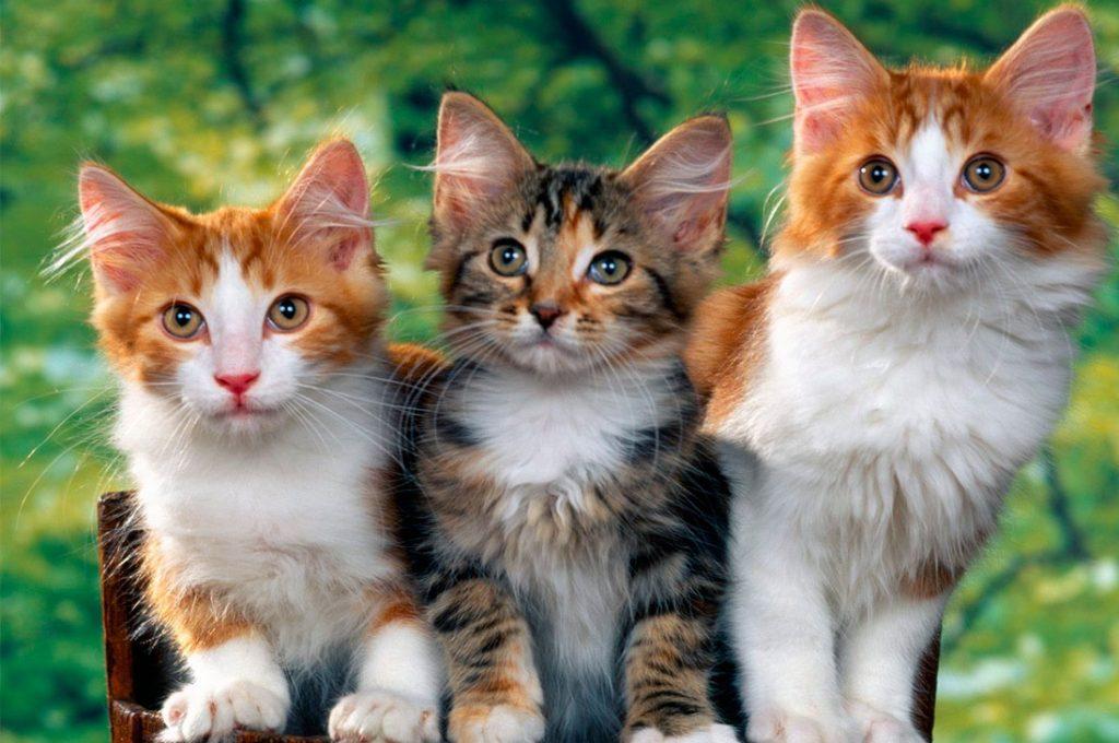 Las 5 preguntas más frecuentes entre los dueños de gatos