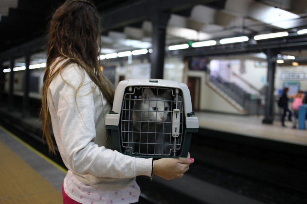 """Metro de Buenos Aires le dice """"sí"""" a las mascotas"""