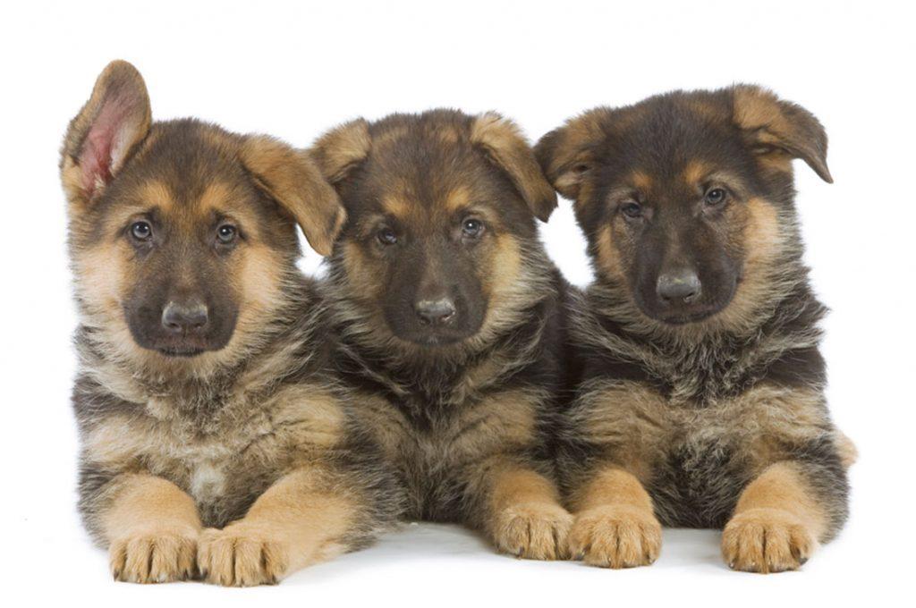 Cuidados intestinales de Cachorros y Gatitos