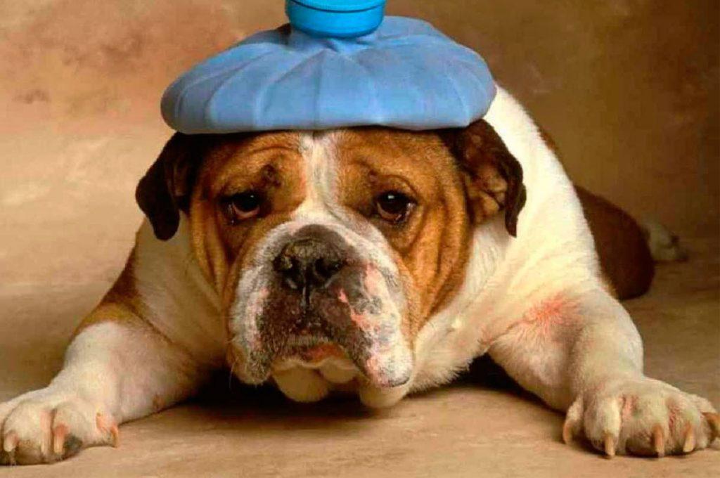 Cuidado con los golpes de calor en las mascotas