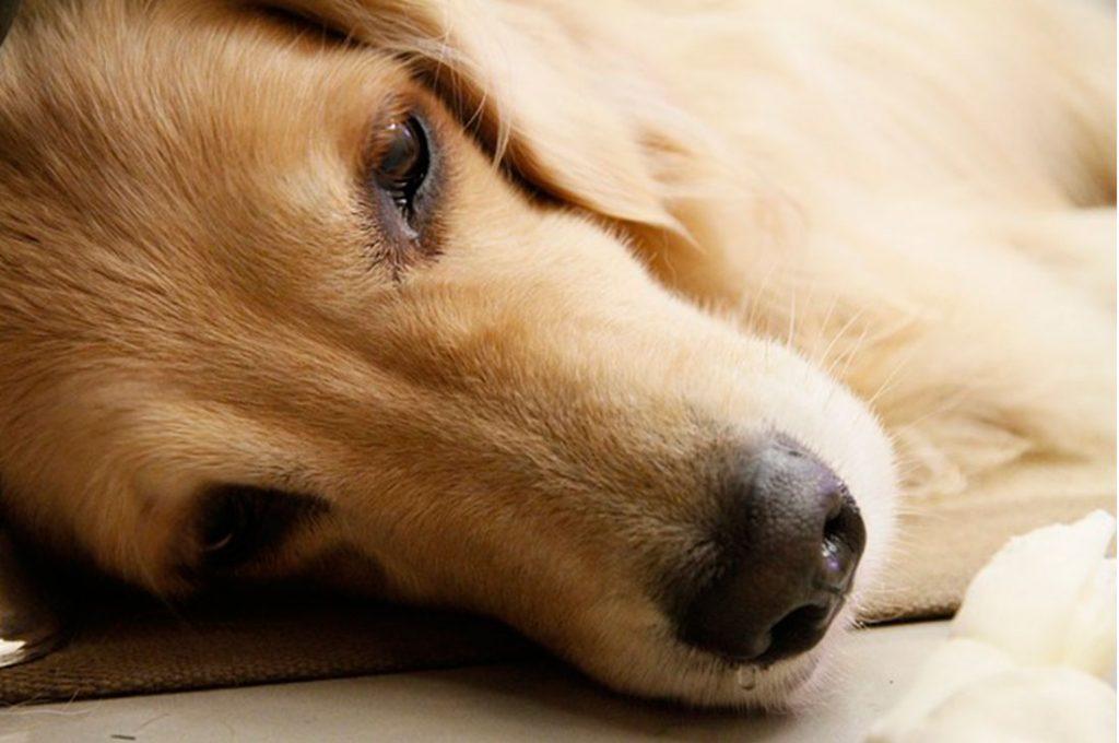 Caída excesiva de pelo en tu mascota? Conoce los cuidados que hay que tener
