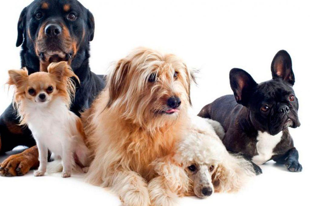 Cómo mantener en buen estado el pelaje de tu perro