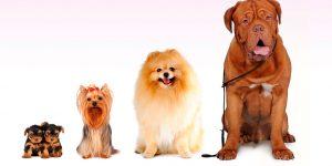mascotas220301