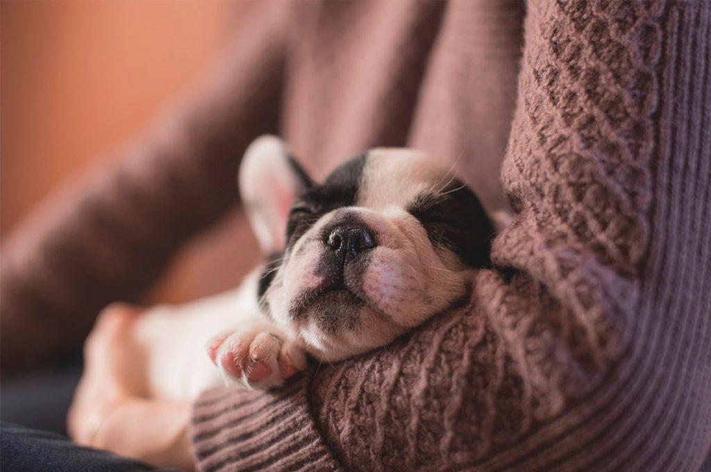 3 razones por las que tu perro duerme tanto