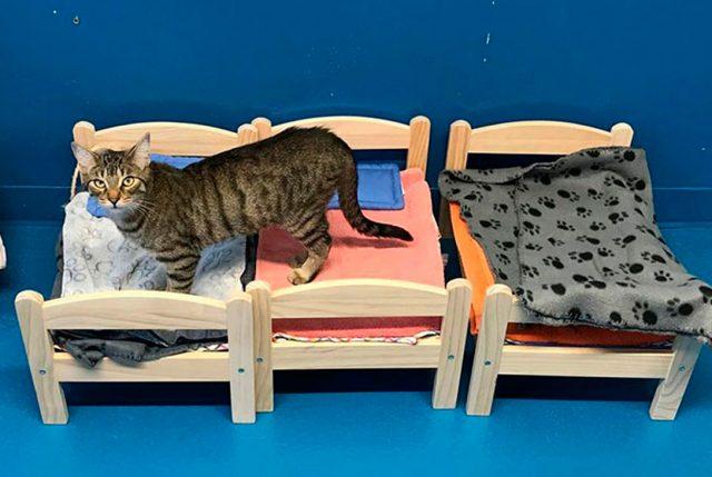 Empresa regala camas de mu ecas para gatos de un refugio for Cama munecas ikea