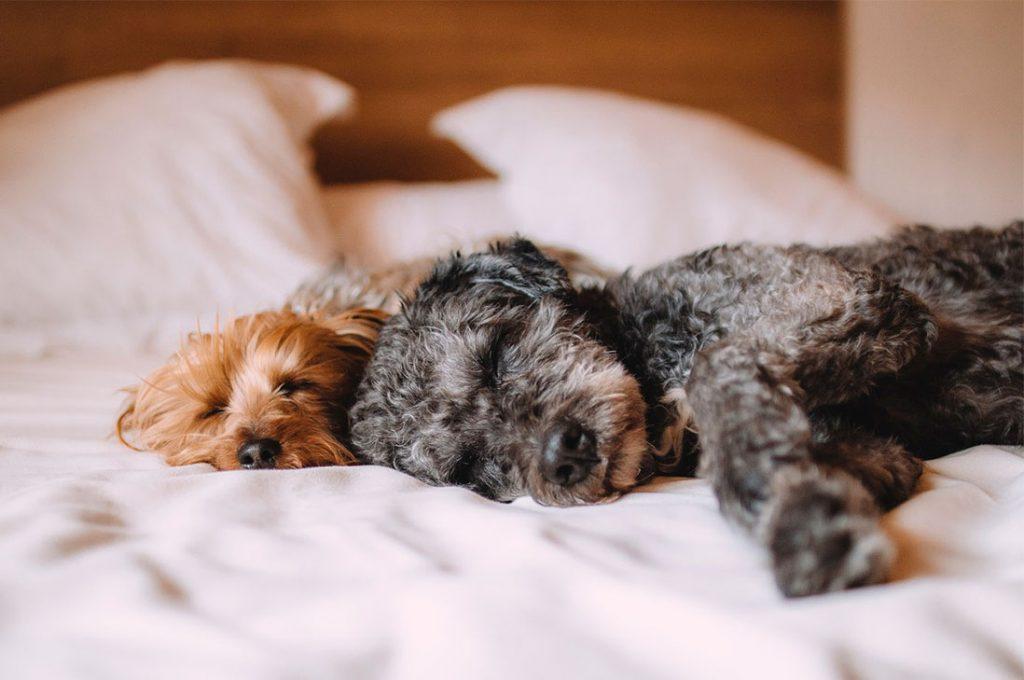 Las 5 preguntas que debes hacer al adquirir una mascota