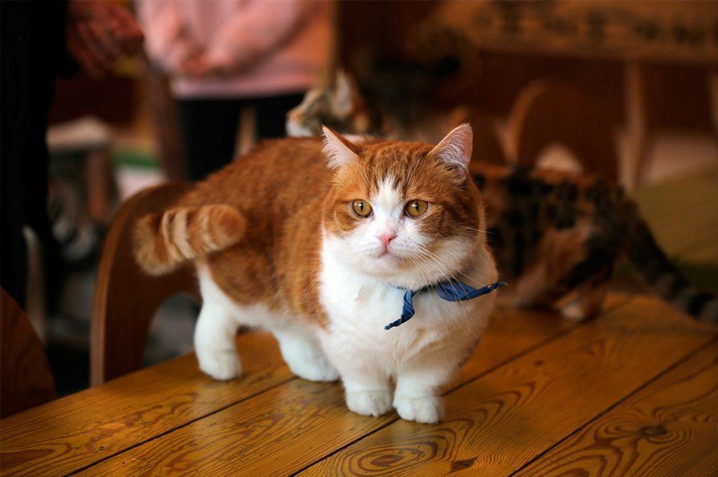 Gatos acompañados