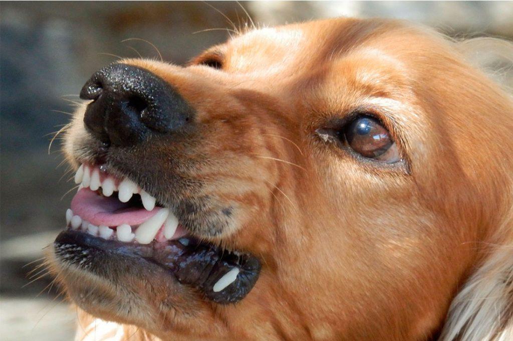 Estudio confirma que los perros pueden detectar a las malas personas