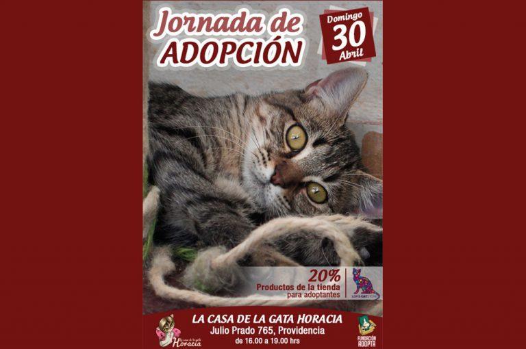 "Centro integral para gatos ""La Gata Horacia"" tendrá jornada de adopción de gatos este domingo"