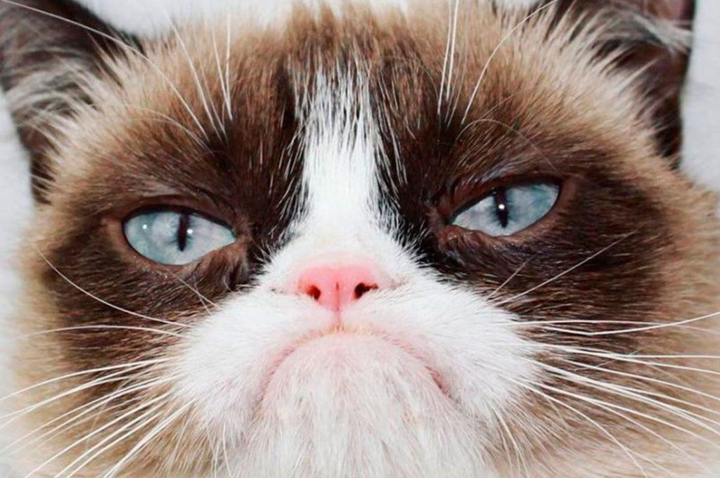 ¿Cómo saber si no le agradas a tu gato?
