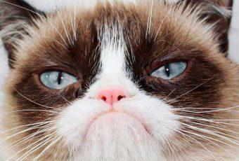 Grumpy Cat, la historia del felino más famoso de las redes sociales