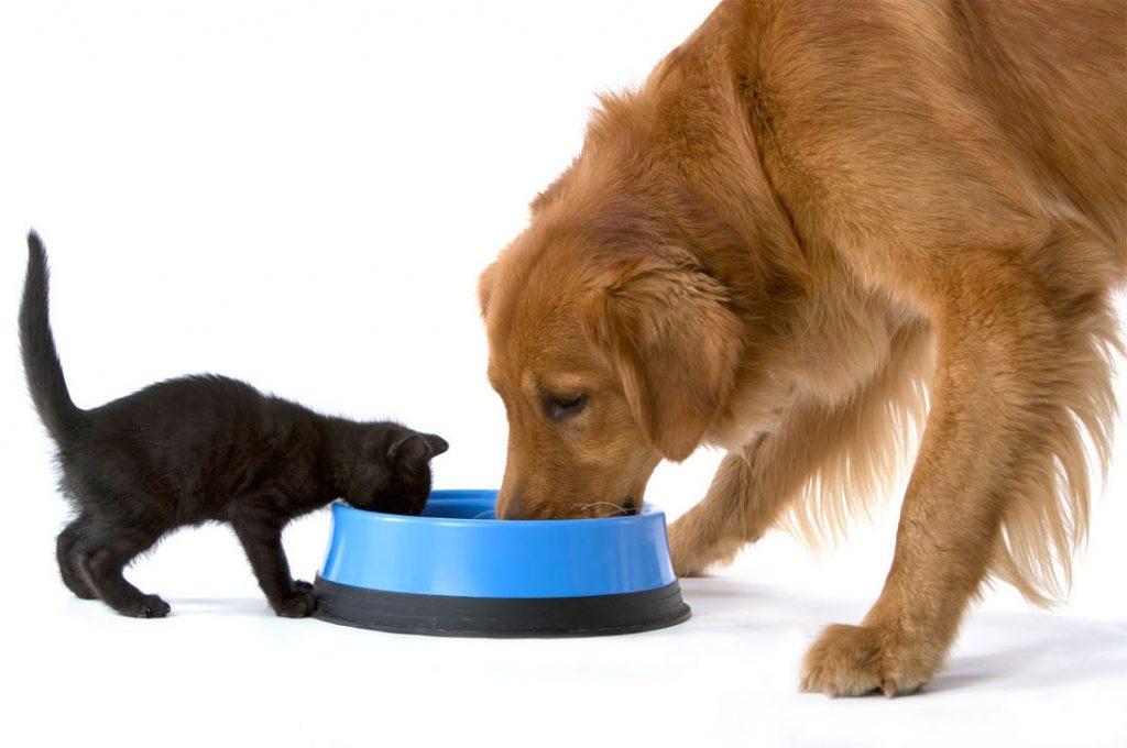 Derribando mitos: Las mascotas no necesitan variar el sabor de su alimento