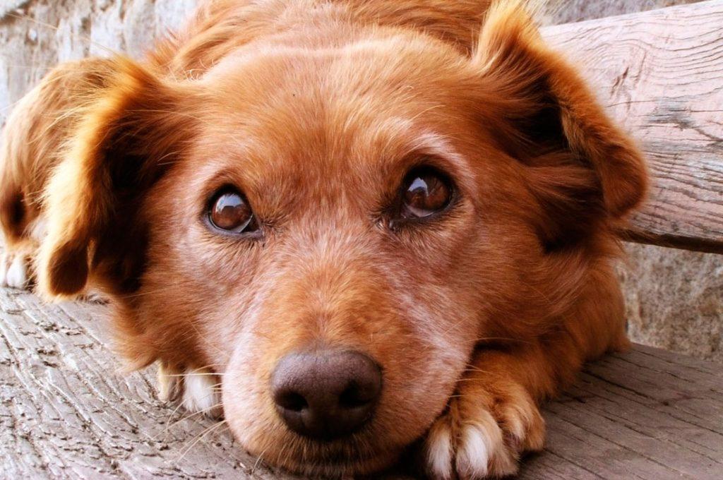 Cómo estimular la vitalidad de tu mascota adulta