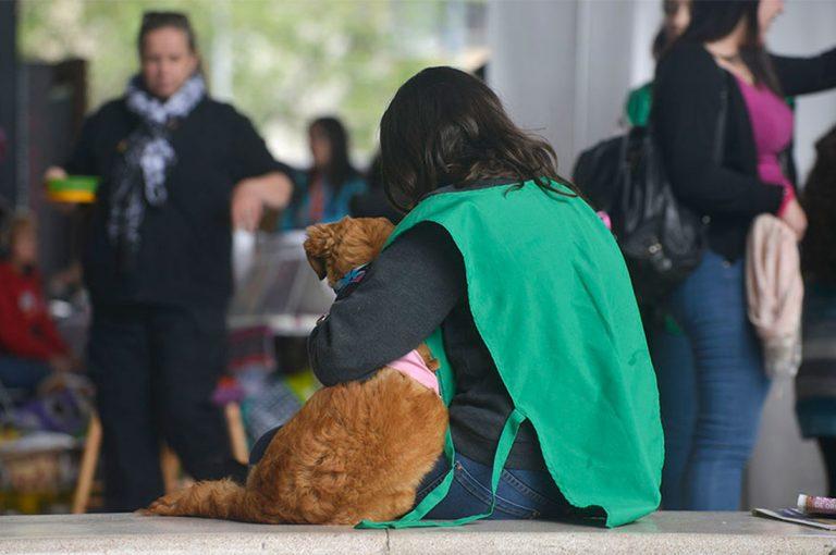 Jornada de adopción de mascotas en GAM