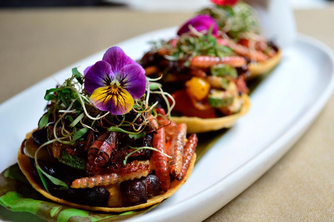 Restaurant Mexicano Ofrece Bichos Comestibles En Su Menu Infogate