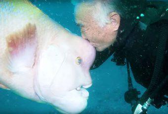 Buceador japonés lleva 25 años visitando a su amigo pez