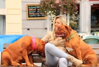 Los perros son los animales perfectos para ayudar a estudiar el comportamiento de una persona