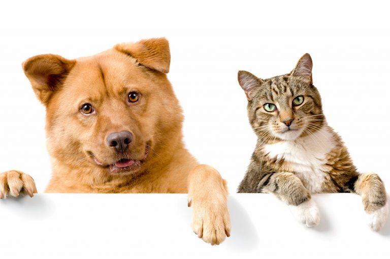 II Gran cruzada de Adopción animal en MidMall Maipú