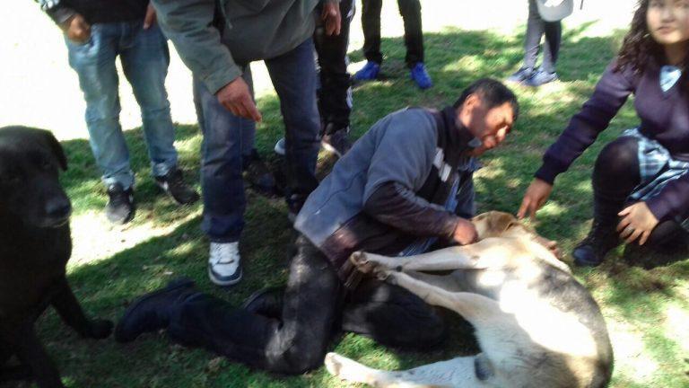 Vallenar: Perro que recibió balazo de carabinero murió
